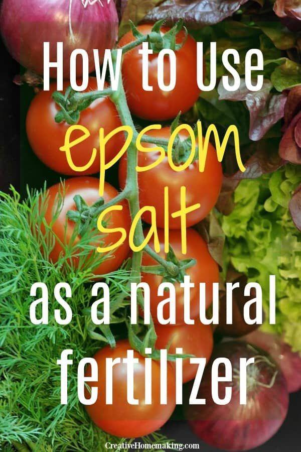 Using Epsom Salt As A Natural Fertilizer In The Garden Fertilizer For Plants Garden Pests Organic Gardening