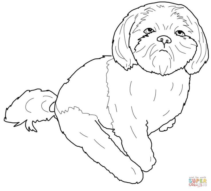 28 besten Shih-Tzu Bilder auf Pinterest | Hunde, Filz hunde und ...