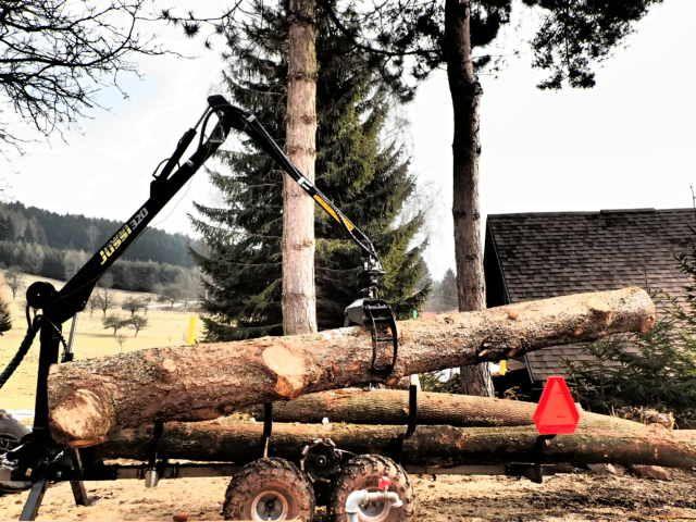 Smrk - Spruce 4m