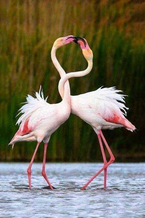 Famingo Pink 7f6898c6c51dee72642f29435651b3f8.jpg (480×720)