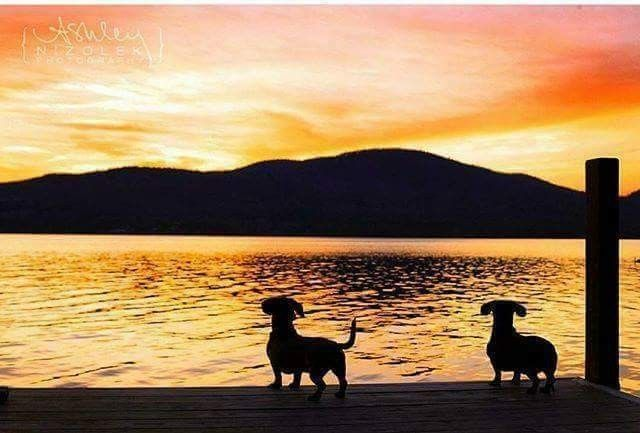 Sunset Dachshund Pets Cute Dog Pictures Weenie Dogs
