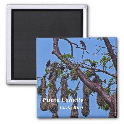 Costa Rica Punta Cahuita - Psarocolius decumanus Magnet - home gifts ideas decor special unique custom individual customized individualized