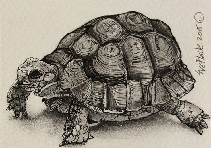 играла черепаха рисунок фото рисунке нападение