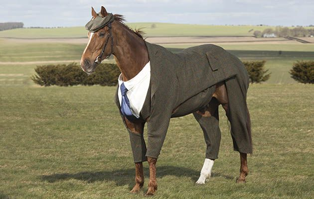 Veteran racehorse Morestead models the world's first authentic Harris Tweed suit designed for a racing horse, which has been specially commissioned by William Hill to celebrate the opening of this year's Cheltenham Festival. Issue date: Monday March 14, 2016. The tweed suit was designed by former Alexander McQueen apprentice Emma Sandham-King and unveiled by 20-time champion jockey Sir Anthony McCoy. Statistician Dr Geoff Ellis found that on average 200 miles and seven furlongs (321.5km) of…