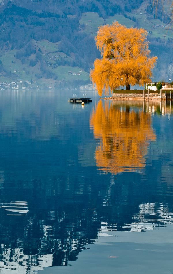Switzerland.: Favorite Places, Colors, Fall, Places Beautiful, Trees, Switzerland, Natural, Photo, Beautiful Travel