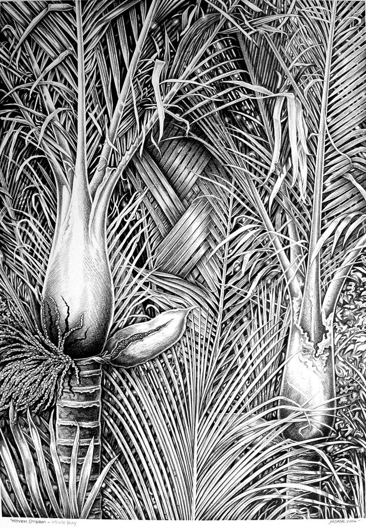 Steve Moase Tutukaka, Whangarei  Woven Green, Pencil Illustration  Inspired by the rich abundance of NZ's exquisite Tutukaka Coast