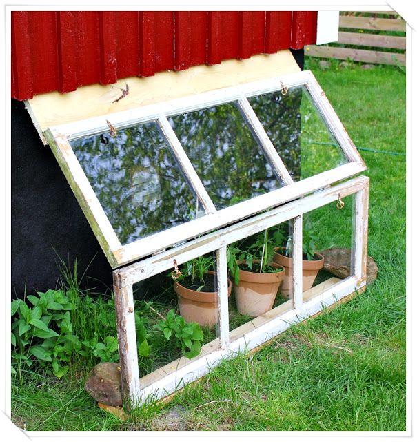 växthus till tomater och chili. Byggt av gamla fönster