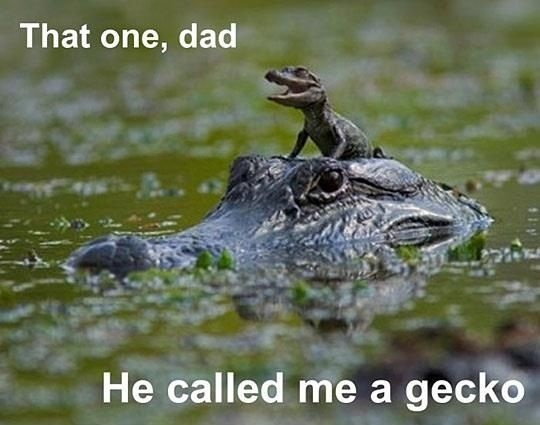 My dad can beat up your dad.    #meme #joke #animals
