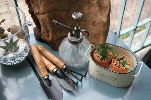little garden. cactus&succulant