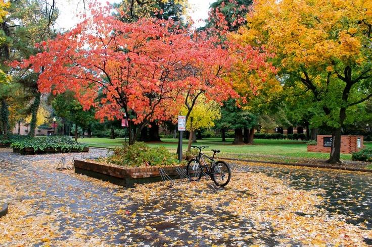 Welcome Fall - Chico, California