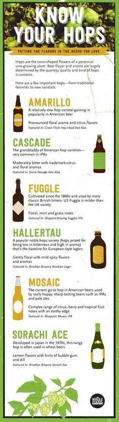 Hops are important in determining the flavor of your favorite beers... Especially craft beers! Amarillo, Cascade, Fuggle, Mosaic... Each one has a unique taste in much the same way grape varietals do.