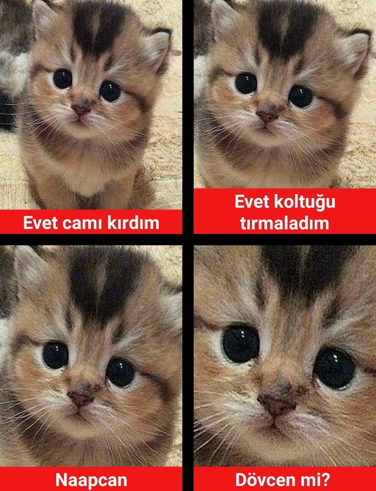 Türkçe caps turkish funny cute
