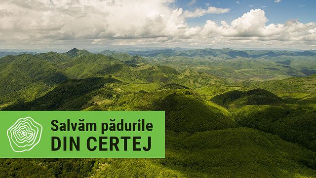 Salvăm pădurile din Certej!