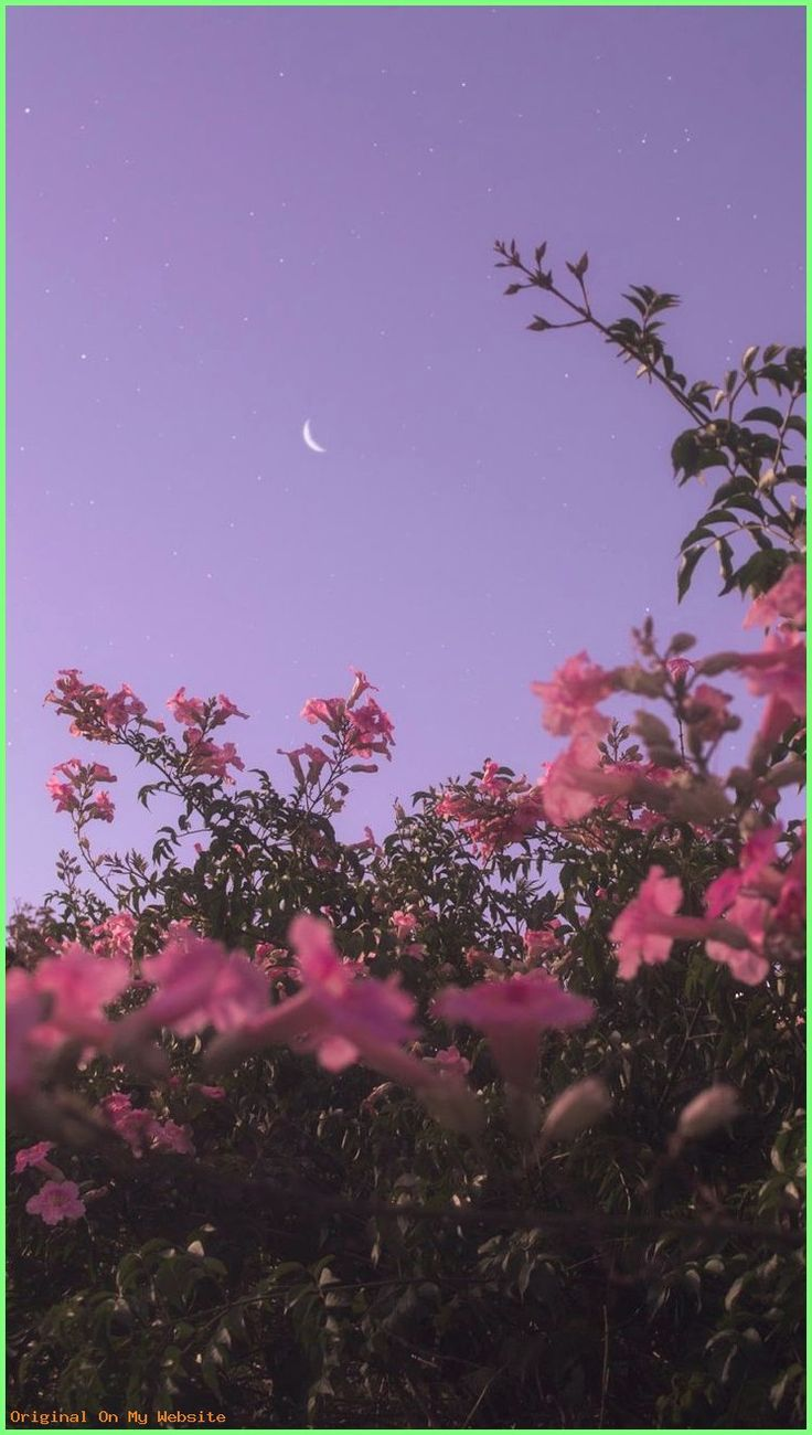 Wallpaper SKY: Flower under night sky #wallpaper #iphone #android #background #followme  #wal…