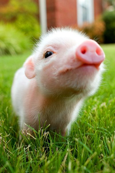 mein persönliches Glücksschwein ;-)