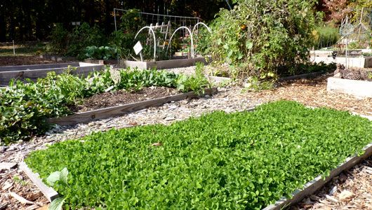 17 best images about growing food on pinterest root - Cover crops for vegetable gardens ...