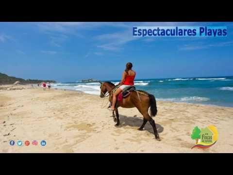 Paquete Turístico Bahía Solano Plan Ballenas P165 https://youtube.com/watch?v=-6rdpzI6H4I  #CabañasEnAlquiler #PaquetesTuristicos #FincasParaAlquilar #FincasEnArriendo #AlquilerDeFincas #CasasCampestres #FincasEnMelgar #FincasDeTurismo #AlquilerdeCabañas #AlquilerDeFincasEnElEjeCafetero #AlquilerDeFincasEnAntioquia