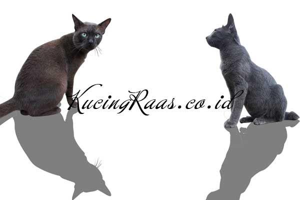 Mitos Kucing Raas Dalam Kehidupan - http://kucingraas.co.id/mitos-kucing-raas-dalam-kehidupan/