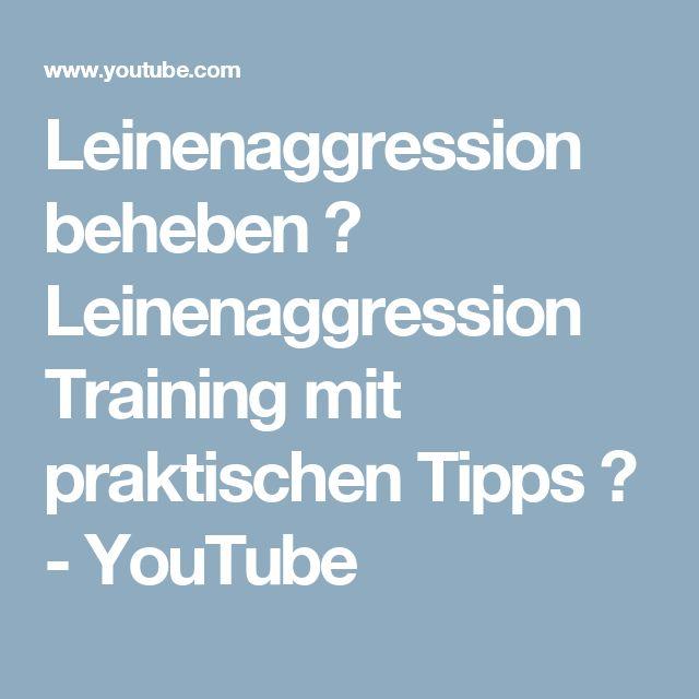 Leinenaggression beheben ✓ Leinenaggression Training mit praktischen Tipps ✓ - YouTube