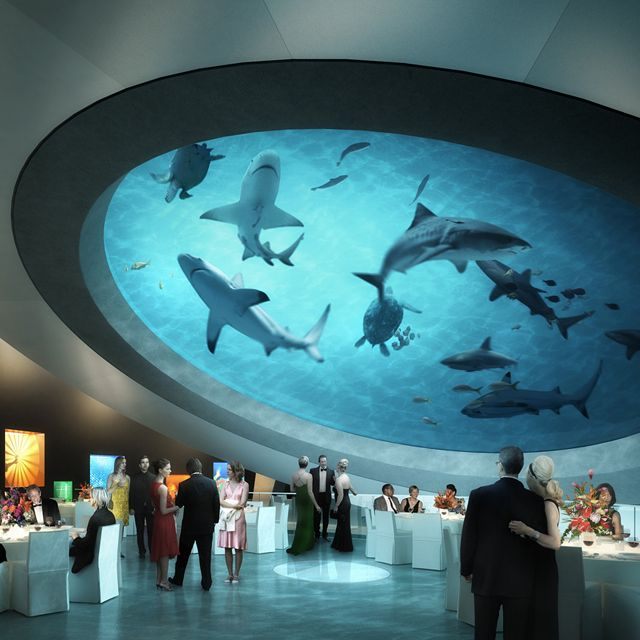The Shark Filled Atrium at the Miami Science Museum is something else! Let's hope the glass never breaks!