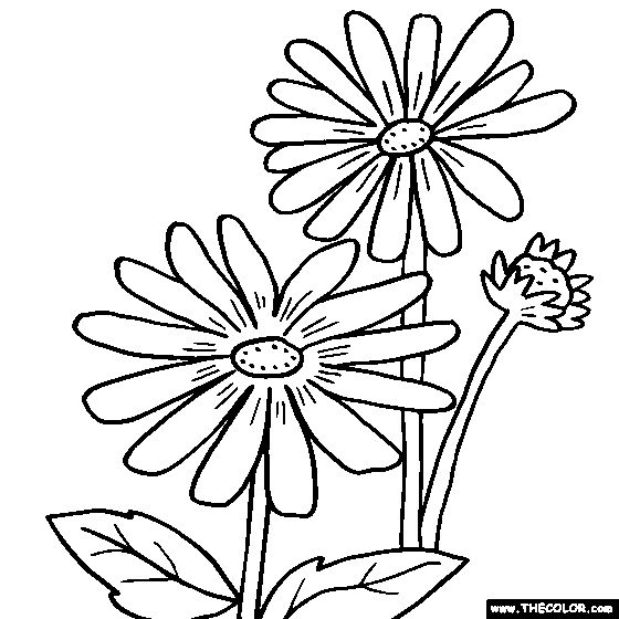 Free Flowers Coloring Pages Color In This Picture Of A Rudbeckia Flower And Others With Our Library Online Save Them Send