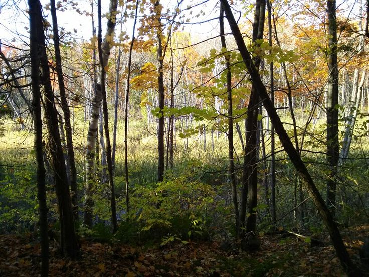 God is the forest * La forêt est Dieu