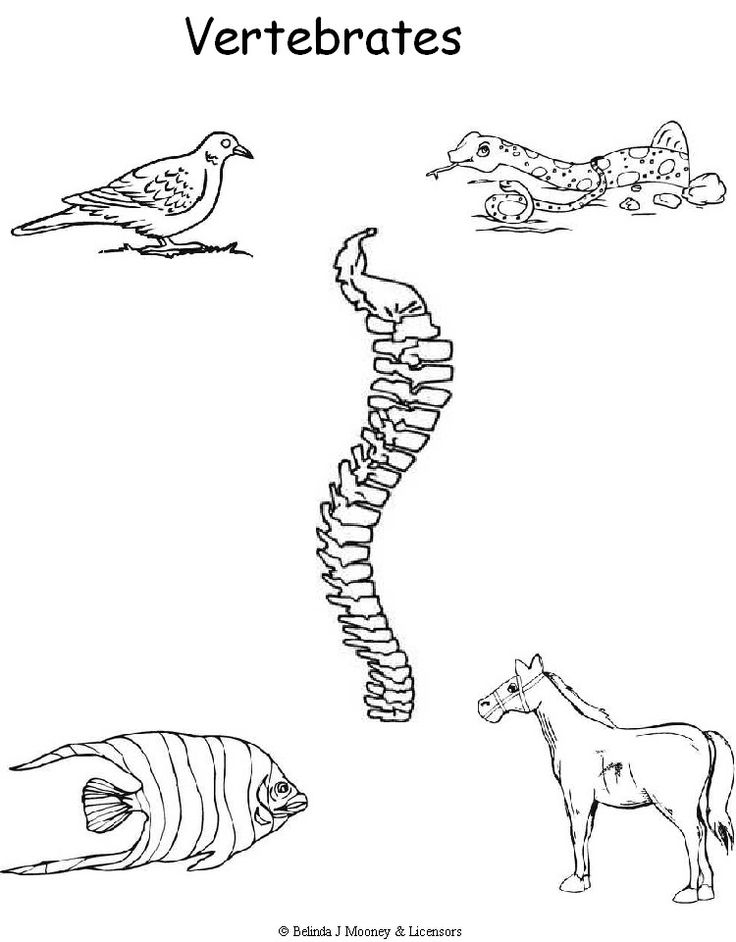 Vertebrate Animals Coloring Pages : Vertebrates coloring sheet cc week my style