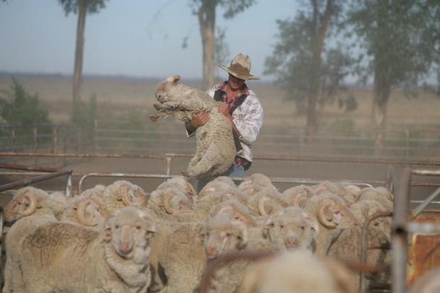 Uardry sheep station, Hay, Australia