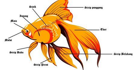 30 Kosakata Bagian Tubuh Hewan Dalam Bahasa Inggris Beserta Artinya - http://www.kuliahbahasainggris.com/30-kosakata-bagian-tubuh-hewan-dalam-bahasa-inggris-beserta-artinya/