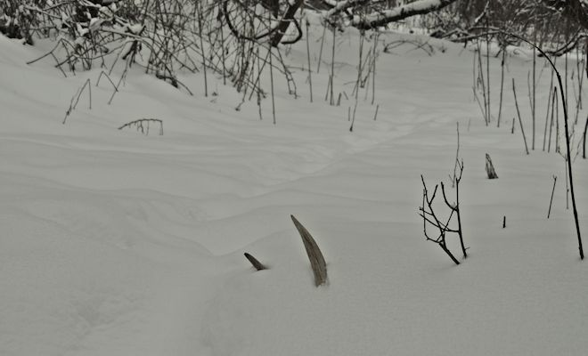 Antlers and Snow are falling:  Solo Shed Hunting Tips