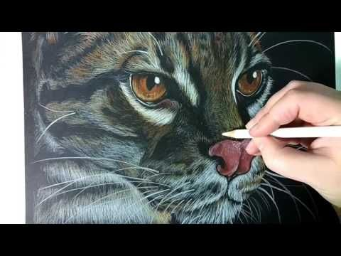 Leopard Ocelot Timelapse colored pencils drawing