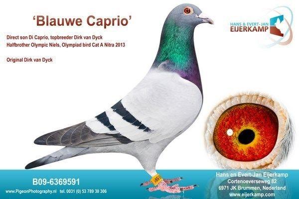 Blauwe Caprio