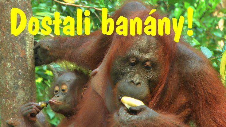 Dostali banány!