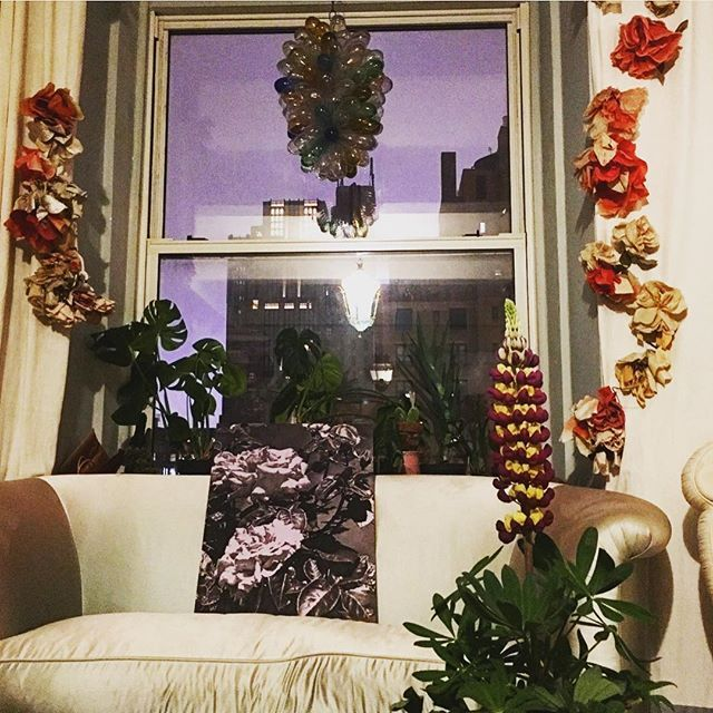 Lupine flowering plant on the right. Magically called 'Manhattan Lights'. Painting of roses, by Andy Mister @turngallery.