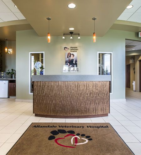 17 Best Images About Reception Areas Veterinary Hospital