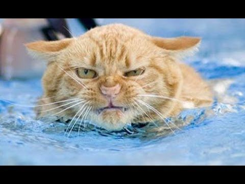 Funny Cats In Water Compilation 2014