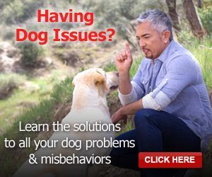 Five Tips to Help Dog Separation Anxiety | Cesar Millan