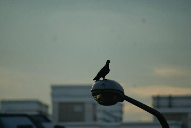 Crow below the sky!!!!