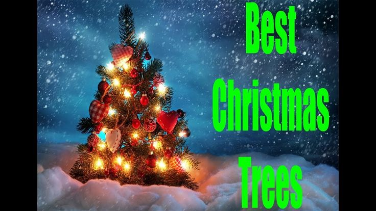 Best Artificial Christmas Trees. Best Christmas Tree. Best Christmas Trees Review. We are helping you to find 5 most efficient Best Artificial Christmas Trees, so that you can save your valuable time without find from lots of Best Christmas Tree. All those best Christmas trees in amazon which we have already tested and found a very good performance with highly customer reviews and feedback. So, we can tell you that, please don't feel any kind of hesitation about the Best Christmas Trees…