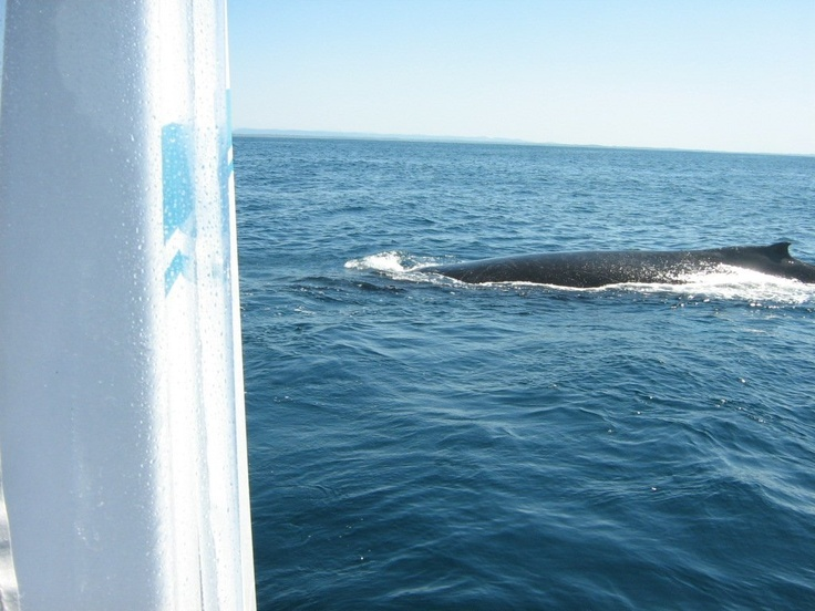 Whale watching off Port Macquarie, NSW