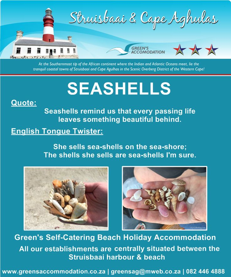 #Seashells #BeachActivities #BeachFinds #Struisbaai