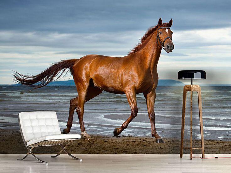 ber ideen zu pferde tapete auf pinterest hunde tapete pferde wandkunst und reit dekor. Black Bedroom Furniture Sets. Home Design Ideas