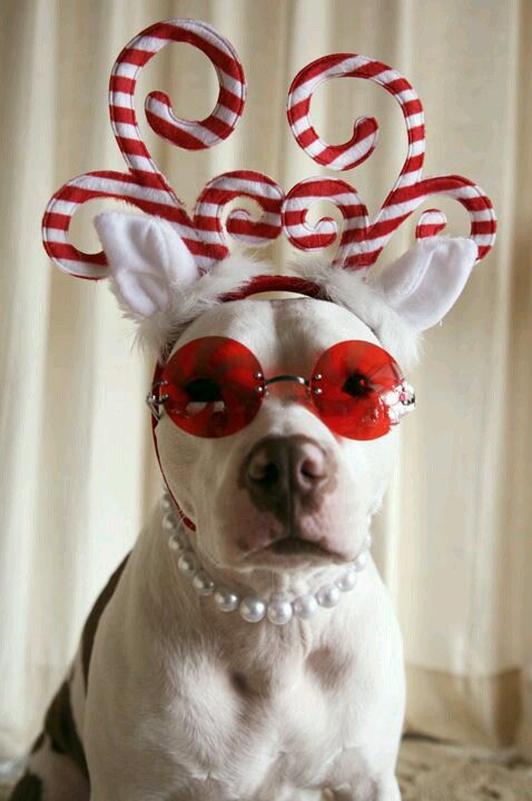 250 Best Dogs In Hats Images On Pinterest Doggies A Dog
