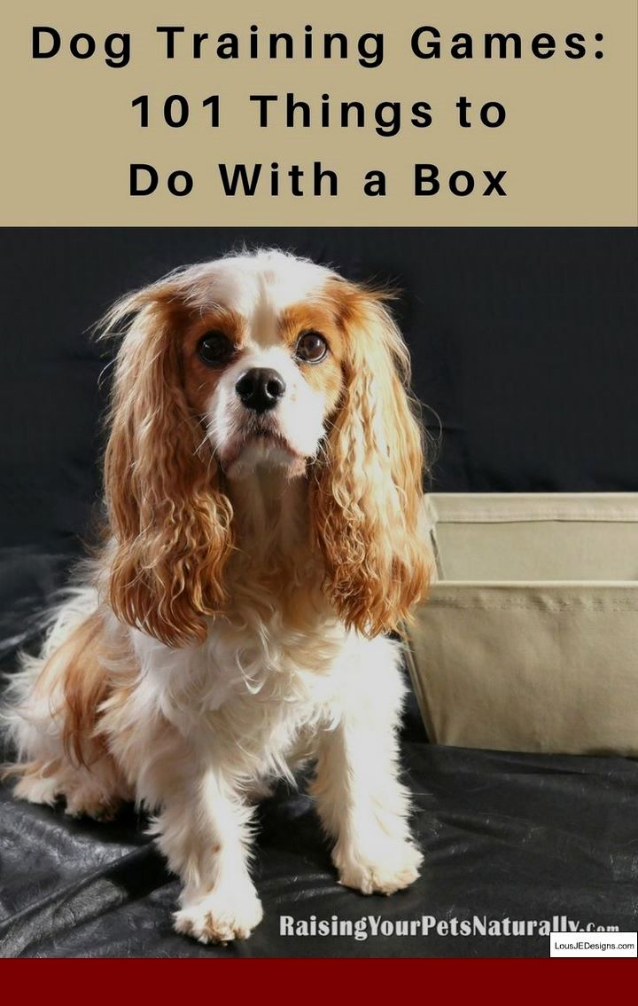 How To Train Your Dog To Wee Outside And Pics Of Dog Behaviour
