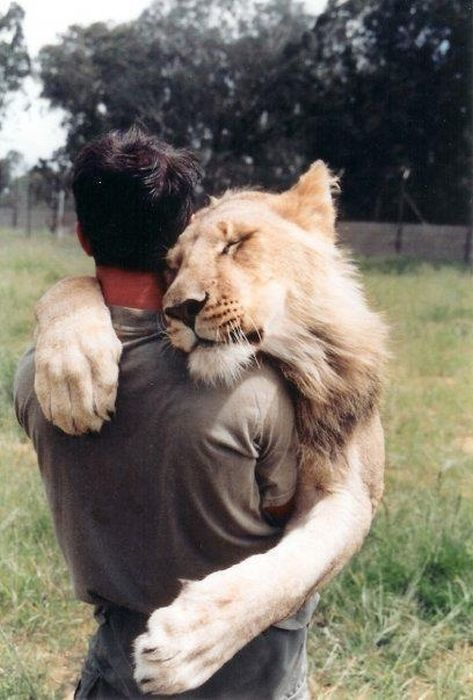 i love that this lion closed its eyes while hugging the man <3