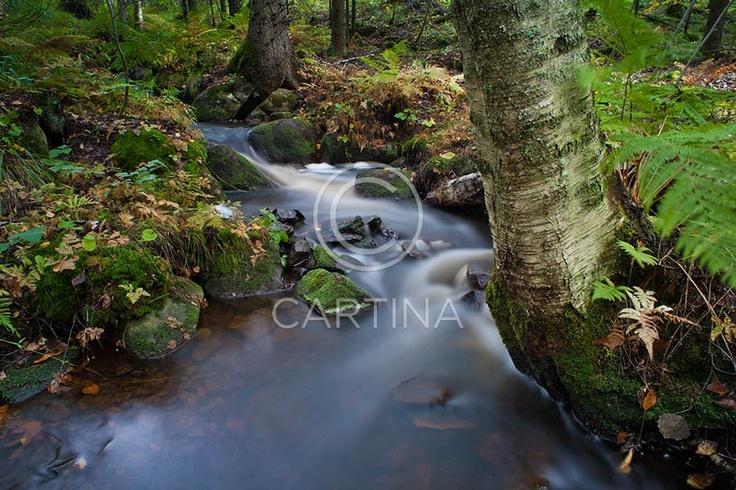 Syksyinen puro. A stream in fall.