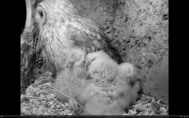 "Rosalind Maud on Twitter: ""@TVsSimonKing Much jubilation! Female returned with food, and then male turned up with more food...everyone happy, and I can go to bed! #SKWildMeadows https://t.co/x8bCWvFWvC"""