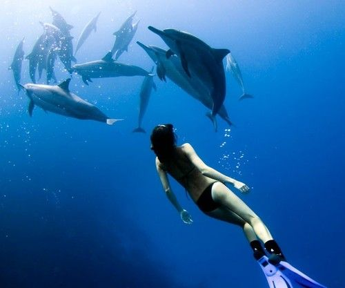 Swim with dolphins - get over my fear of the water and consume its wonder and beauty.