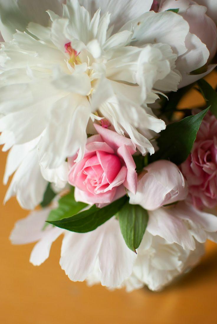 rózsaszín és fehér #rózsa #pünkösdirózsa Zöld kert