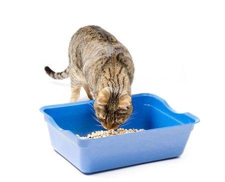 Der richtige Inhalt für die Katzentoilette: Ratgeber Katzenstreu - http://www.katzenklo-kaufen.de/der-richtige-inhalt-fuer-die-katzentoilette-ratgeber-katzenstreu/